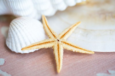 Dried starfish are delicate and beautiful.