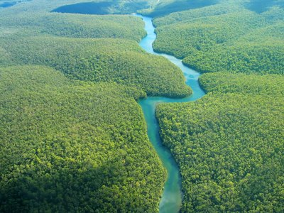 aerial view of the dense vegetation of the rain forest
