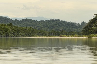 The Amazon rainforest contains plants and animals found in no other area.