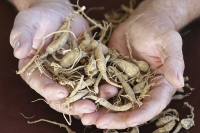 Ginseng Plant Identification
