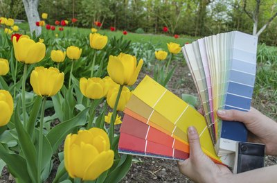 Using a palate color card in front of a garden
