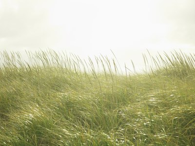 summer allergies are caused by grasses and weeds.