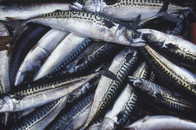 Mackerel