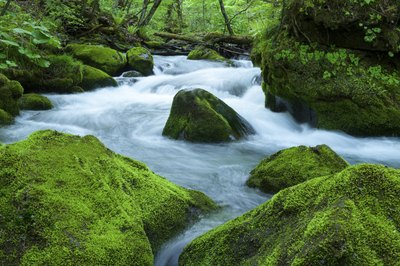 Mosses that grow in waterways require more garden moisture.