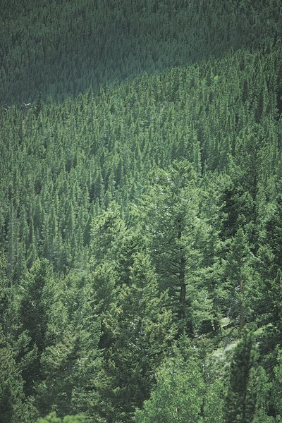 Hunter green is the color of a deep pine forest.