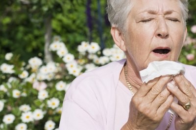 Mature woman about to sneeze due to her allergies