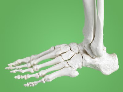 There are 26 bones in each foot and 33 joints in each foot and ankle.