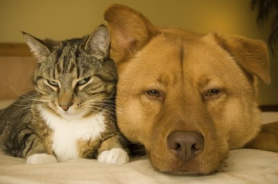 Both cats and dogs are capable of hearing a dog whistle.