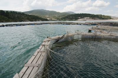 An aquaculture production pool.