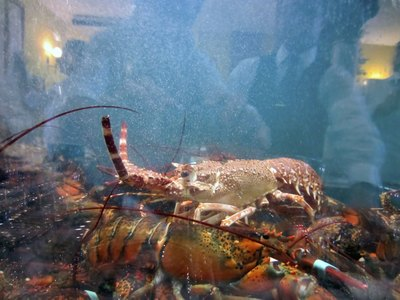 A tank displaying lobster.