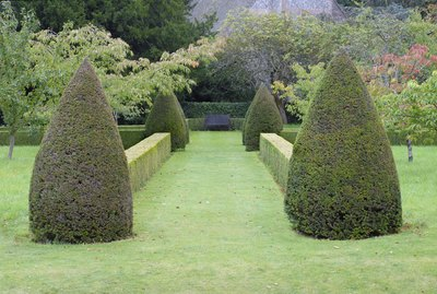 Hedges and evergreens leading to a backyard garden.