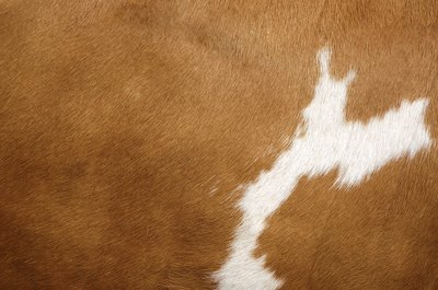 Detail of cowhide