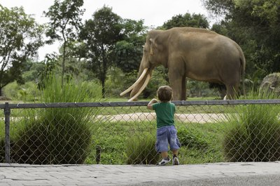 little boy looking at elephant at zoo