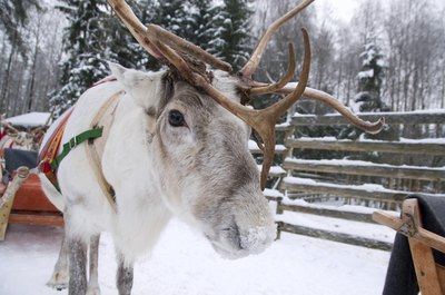 """Pin the Nose on Rudolph""."