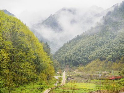 Mountain forests in China.