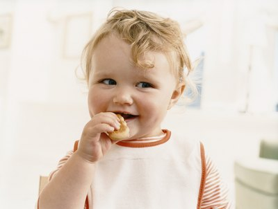 A growing baby eats a biscuit.