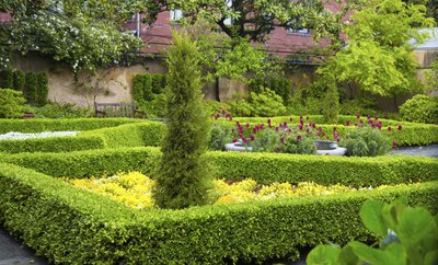 Decorative individual plots divided by hedges in an English garden.