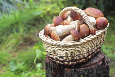 A basket of fresh mushrooms in a forest.