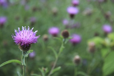 Make sure tea is caffein free such as milk thistle