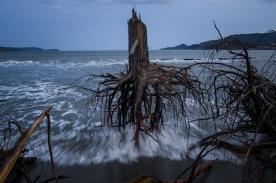 Powerful waves uproot trees near the shoreline.