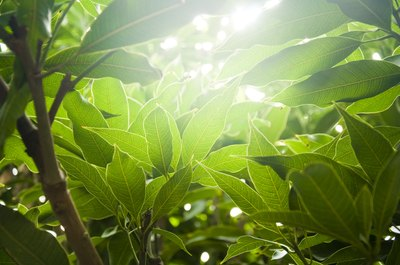 what plants use chemosynthesis Photosynthesis photosynthesis is the process by which plants, some bacteria and some protistans use the energy from sunlight to produce glucose from carbon.