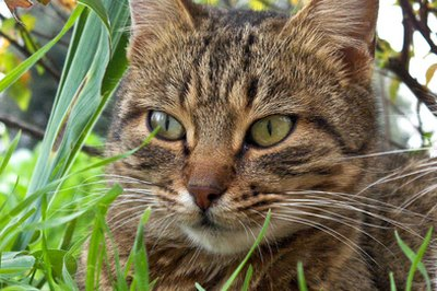 Smelling another cat outside can cause your cat to spray inside.