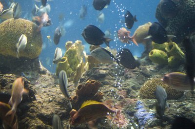 Overstocking a tank can affect fish health.