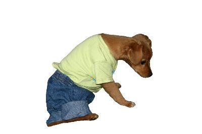 Making dog pajamas is a cost-effective way to keep your pet safe and warm.