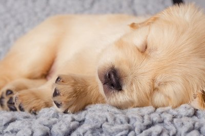 A puppy spends most of its first week sleeping.