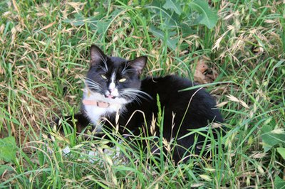 Keep your cat away from areas where ticks thrive, like tall grass.