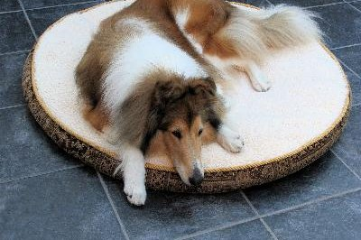 Large indoor dogs will enjoy a soft, insulated bed in cold weather.