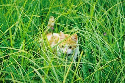 It's probably safe for your cat to munch on grass. Research the each species' toxicity to make sure, though.
