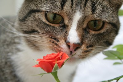 If your cat eats a toxic flower it could cause serious internal damage.