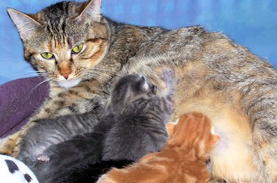 An ill mother cat may not be able to nurse her babies.