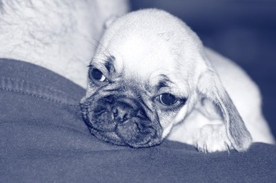 After a miscarriage, your dog might show signs of general depression.