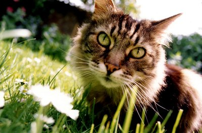 Outdoor cats bothering your indoor kitty can be repelled with natural, nontoxic substances.