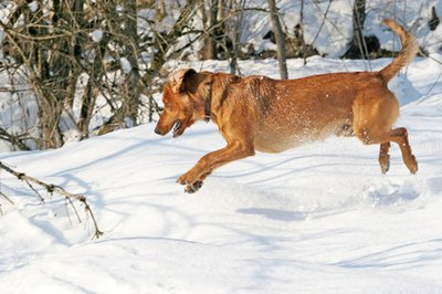 Active and athletic dogs may develop bone spurs.