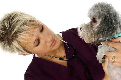 Veterinary care is essential for dogs infected with parvo.