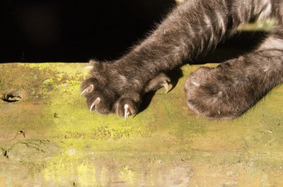 Biotin is needed for healthy nails - and claws.