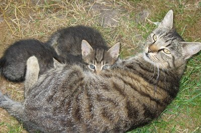 Kittens can pick up some types of worms from their mother.