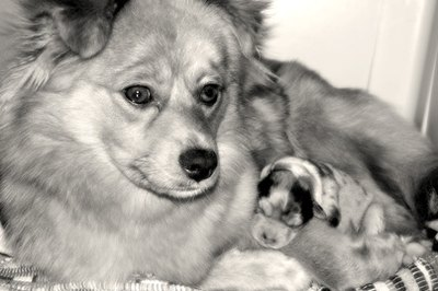 Mother dogs are very protective of their puppies.