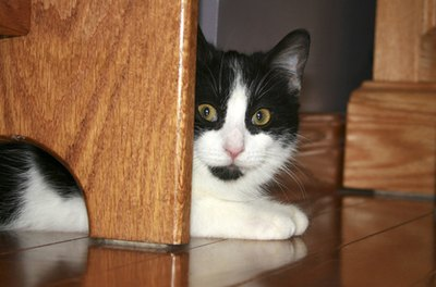 Cats feel less vulnerable in the space under the bed.