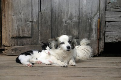 A cat and a dog can learn to love each other.