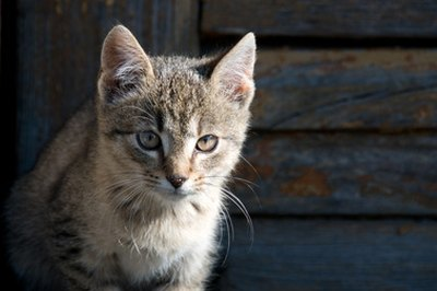A cat's urine is highly concentrated and acidic, leaving behind a strong odor.