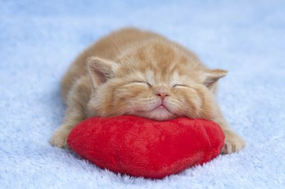 There are many causes of snoring in kittens.