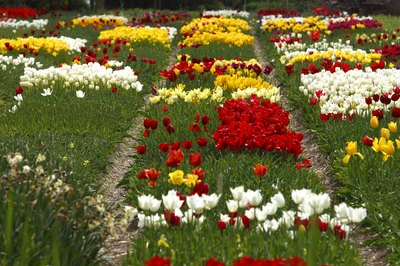 Flowers need good soil to thrive, so plan on testing your soil.