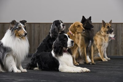 A modern dog pack may be as diversified as any modern-day family.