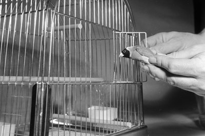 Most finches don't care for human handling.