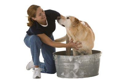 Bathing your dog can help reduce dander.