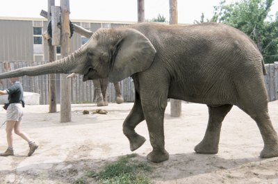 Wild animals in zoos occasionally cause injury to care givers.
